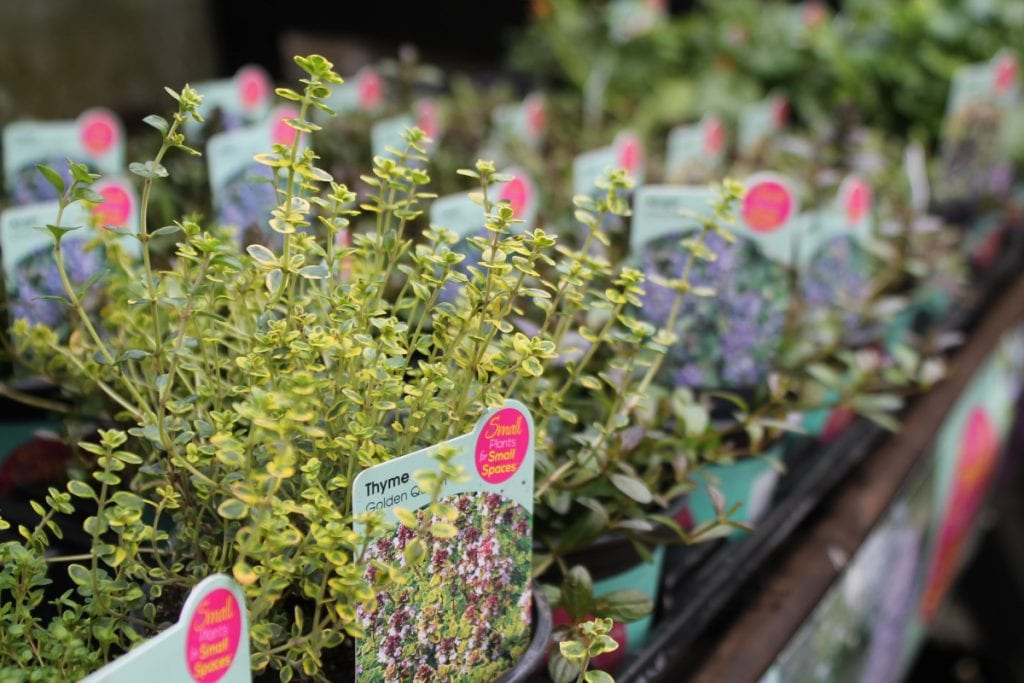Small Plants for Small Spaces display at the Old Railway Line Garden Centre