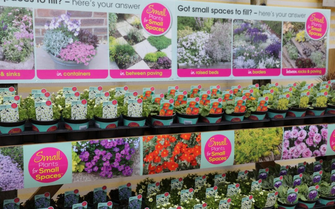 Continued success for Farplants' Small Plants for Small Spaces