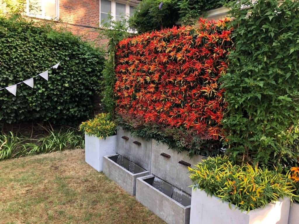 Wall planted with chillis