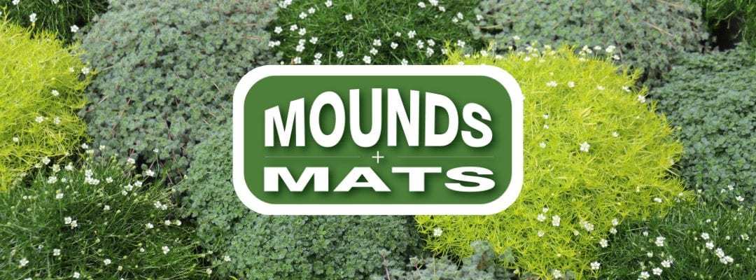 Mounds and Mats, New launch from Farplants